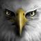 老鹰模拟飞行安卓版(手机安卓老鹰模拟飞行下载)V1.1.18官方版
