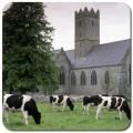 美丽的爱尔兰壁纸 Beautif手机版(手机美丽的爱尔兰壁纸Beautif安卓版下载)V2.0官方版
